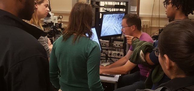 Neuroscience Initiative to Enhance Diversity (NIED)